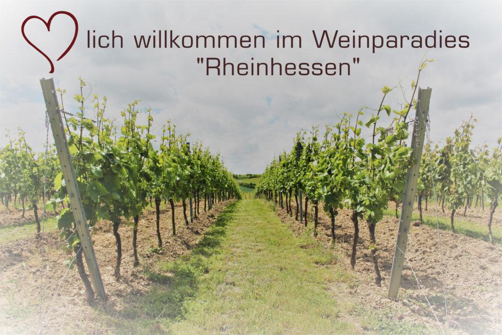 Weinparadies Rheinhessen